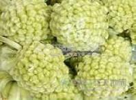 西藏野生-绿萝花